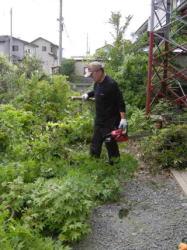 竹も伐採します。